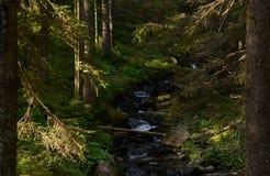 Gli alti vecchi alberi si sviluppano sui pendii delle montagne La conquista dei picchi immagine stock libera da diritti