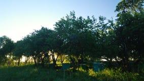 Gli alveari del miele nella mela di primavera fanno il giardinaggio contro il fondo del tramonto video d archivio