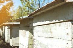 Gli alveari di legno delle api si chiudono su Immagini Stock Libere da Diritti