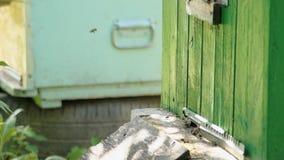 Gli alveari in un'arnia con le api che volano all'atterraggio imbarca in un giardino verde stock footage