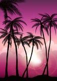 Gli ambiti di provenienza tropicali dell'estate hanno messo con le palme, il cielo ed il tramonto Carta dell'invito dell'aletta d Immagine Stock