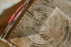 Gli anelli di anno su un palo del recinto di Sammamish trascinano Fotografie Stock Libere da Diritti