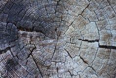 Gli anelli di vecchio albero immagini stock