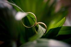 Gli anelli sui fiori, in una scatola, su un tessuto bianco sui giocattoli, colori, dettagli di nozze, fedi nuziali Immagine Stock Libera da Diritti