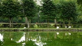 Gli animali ad un castello di Canon fanno il giardinaggio, la Francia stock footage