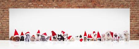 Gli animali del Babbo Natale si avvicinano al grande tabellone per le affissioni in bianco Fotografia Stock