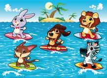 Gli animali divertenti stanno praticando il surfing nel mare. Immagine Stock