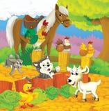 Gli animali felici sull'azienda agricola Fotografie Stock Libere da Diritti