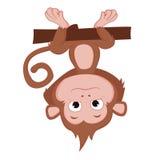 Gli anni della scimmia Immagini Stock
