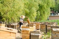 Gli apicoltori nel lavoro immagine stock