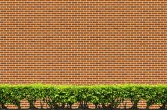 Gli arbusti recintano sul muro di mattoni Immagini Stock