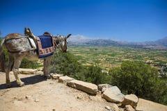 Gli asini nelle montagne vicino allo Psychro franano Creta, Grecia Fotografia Stock