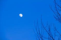 Gli aumenti della luna Immagini Stock Libere da Diritti