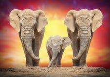 Gli elefanti africani Fotografia Stock