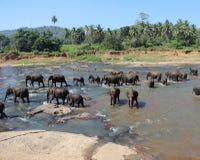 Gli elefanti che bagnano Immagini Stock Libere da Diritti