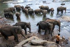Gli elefanti dall'orfanotrofio dell'elefante di Pinnawela (Pinnewala) si rilassano sulla banca di Maha Oya River nello Sri Lanka Fotografie Stock