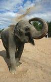 Gli elefanti di bagno 7 Fotografia Stock