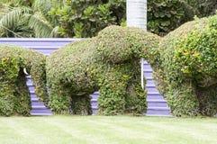 Gli elefanti hanno fatto il ‹del †del ‹del †con le piante Fotografia Stock Libera da Diritti