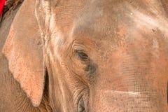 Gli elefanti nel lampang della Tailandia Fotografia Stock Libera da Diritti