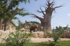 Gli elefanti si avvicinano ad un vecchio albero Immagine Stock