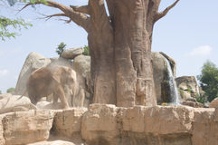 Gli elefanti si avvicinano ad un vecchio albero Fotografie Stock