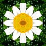 Gli elementi grafici hanno fatto di un'immagine del fiore della margherita fotografia stock libera da diritti