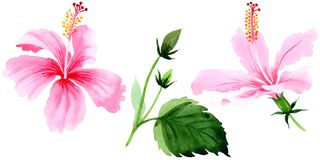 Gli ibischi del Wildflower dentellano il fiore in uno stile dell'acquerello isolato illustrazione di stock
