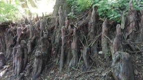 Gli idoli di fiaba meravigliosamente che costano lungo lo stagno Fotografie Stock Libere da Diritti