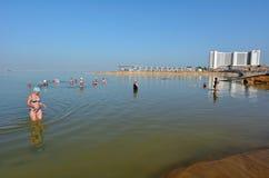 Gli impianti del mar Morto - Israele Immagini Stock