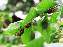 Gli insetti Immagini Stock Libere da Diritti