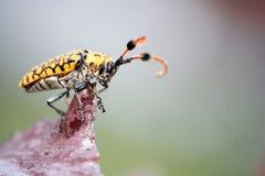 Gli insetti del primo piano sugli alberi Fotografia Stock