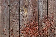 Gli insetti di mille rossi Immagine Stock