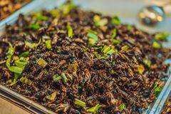 Gli insetti fritti, insetti hanno fritto sull'alimento della via in Tailandia fotografia stock libera da diritti