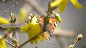 Gli insetti sorvolano i fiori archivi video