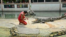 Gli istruttori professionali eseguono la manifestazione rischiosa di acrobazia con il grande coccodrillo dell'acqua dolce in Tail archivi video