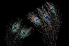 Gli occhi 2 del pavone Fotografie Stock Libere da Diritti