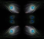 Gli occhi 5 del pavone Fotografia Stock Libera da Diritti