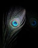 Gli occhi 6 del pavone Fotografia Stock Libera da Diritti