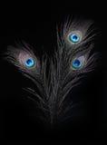 Gli occhi 7 del pavone Fotografie Stock Libere da Diritti