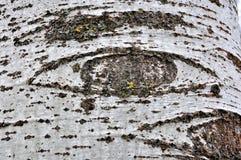 Gli occhi della natura Fotografia Stock