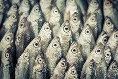 Gli occhi di pesce Fotografia Stock Libera da Diritti
