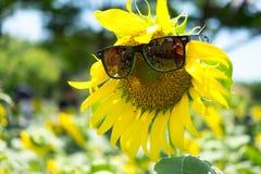 Gli occhiali da sole di usura del girasole con luce solare sul girasole sistemano Immagini Stock Libere da Diritti