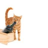 Gli odori del gatto imbottigliano una scatola Fotografie Stock