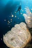 Gli operatori subacquei di scuba nuotano sotto la barca con il corallo del ventilatore fotografia stock