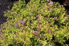 Gli ovuli di fioritura dell'albero hanno contenuto nell'ovaia fotografia stock libera da diritti