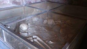 Gli sciacalli sono morto provare a rubare a Pompei stock footage