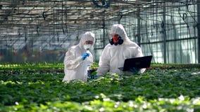 Gli scienziati stanno cadendo il liquido chimico sulle piante stock footage