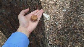 Gli scoiattoli ottiene i biscotti, arachide, pistacchio stock footage