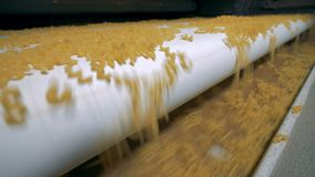 Gli spaghetti stanno cadendo da un'ampia cinghia ad una videoripresa rapida stretta di elettricità statica del trasportatore stock footage