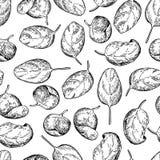 Gli spinaci lasciano il modello senza cuciture disegnato a mano rotazione royalty illustrazione gratis